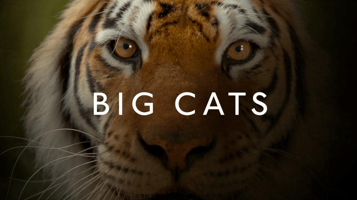 2018高分纪录片 BBC.大猫.BigCats 三集全 1080p BT种子-垃圾站