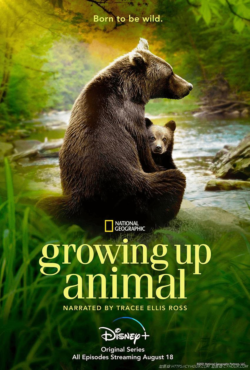 动物成长 1080p 第一季 全6集 Growing Up Animal S01 (2021) 英语中字-垃圾站
